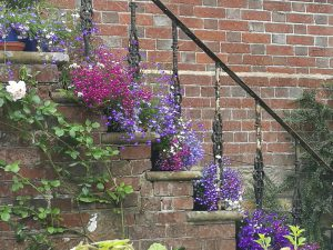 Images of flowers planted on edge of brick steps